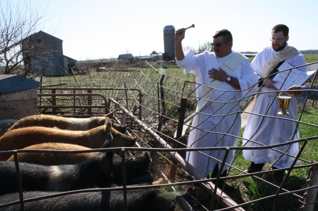 Deacon Eric Bertrand of Warren County, Iowa, and Deacon Tom Hunkele of Des Moines bless hogs April 10. The two are reviving the ancient Catholic tradition of Ember days. (CNS/Kelly Mescher Collins, Diocese of Des Moines)