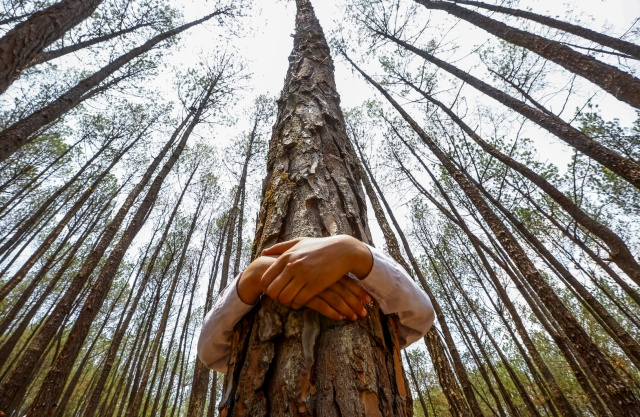 """A Nepalese man hugs a tree while celebrating World Environment Day at the forest of Gokarna, on the outskirts of Kathmandu, Nepal, in this 2014 photo. The Vatican has announced that Pope Francis' encyclical on the environment, """"Laudato Si': On the Care of Our Common Home,"""" will be released June 18. (CNS/EPA)"""