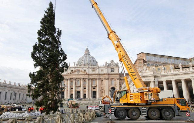 The Vatican Christmas tree is positioned in St. Peter's Square at the Vatican Nov. 24. The 82-feet-tall tree is from the Trentino province in northern Italy. (CNS/Reuters)