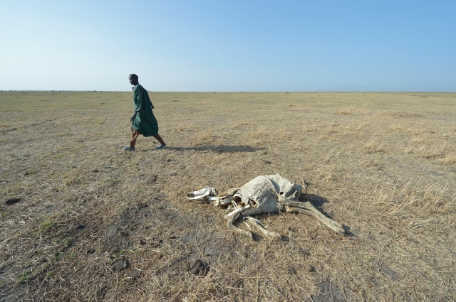 A man walks by a dead cow in Dong Boma, South Sudan. Up to 20 million people in South Sudan, Yemen, Somalia and northeast Nigeria face the prospect of famine this year. (CNS/Paul Jeffrey)